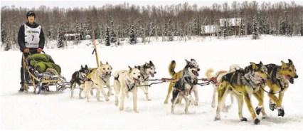 noah pereira with dogs